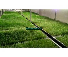 مشاوره و اجرای دستگاه تولید علوفه هیدروپونیک با قیمت مناسب