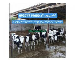 گوسالهفروشترکمن